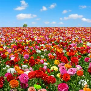 body_flowers