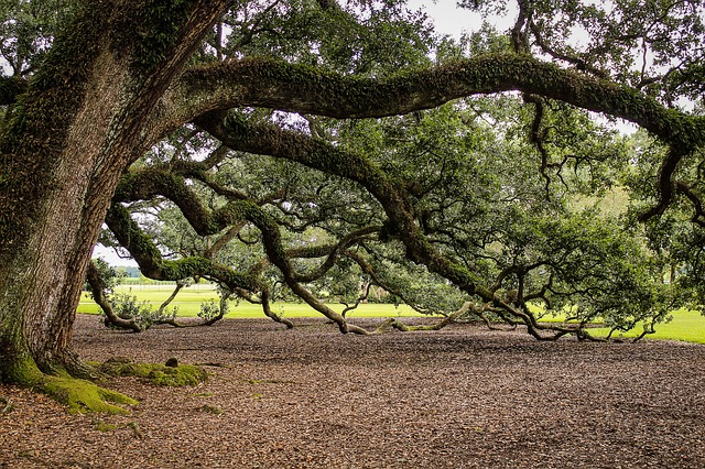 40_tree.jpg