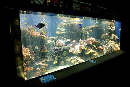Body_fish_tank.jpg