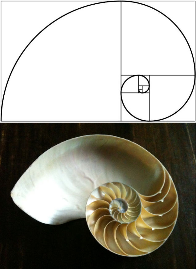 Body_golden_ratio.jpg
