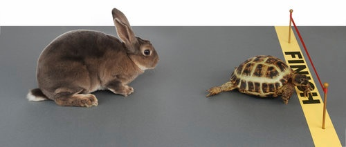 Body_hare_and_tortoise.jpg
