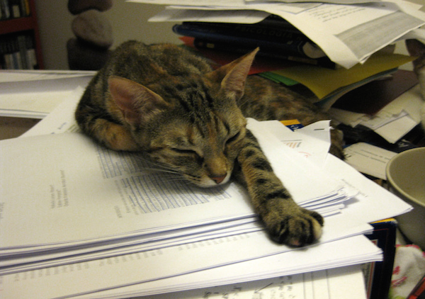 Body_tired_cat.png