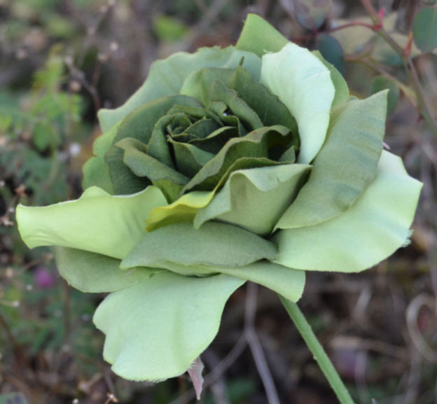 Green_Rose_Uetersen_2012_02.jpg