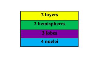 Table- Cerebellum Structure Eqtn