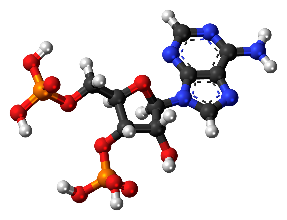 adenosine-biphosphate-872312_1920