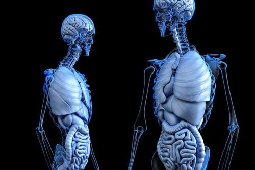 anatomical-2261006_1280