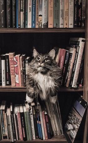 animal-bookcase-books-156321