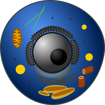 animal-cell-1608621_640