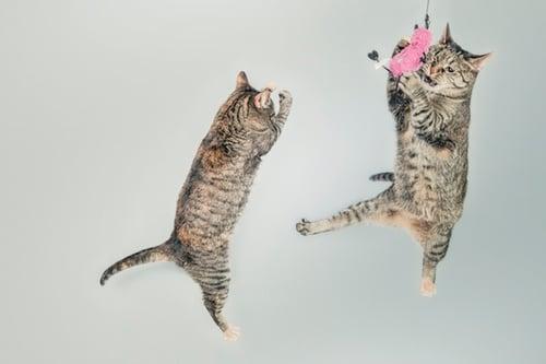 animals-cats-cute-4602