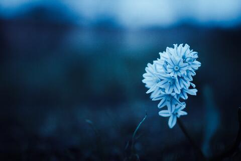 beautiful-blue-flora-80277
