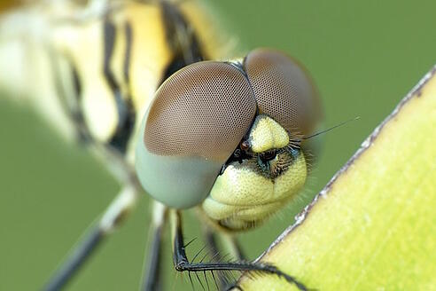 biology-color-dragonfly-131618
