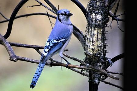 body-bird-feeder