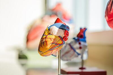 body-heart-medical-school-cc0