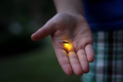 body-lightning-bug-hand
