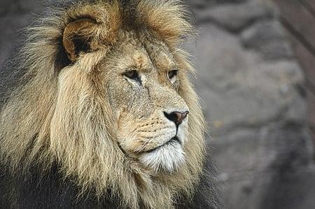 body-male-lion-leo