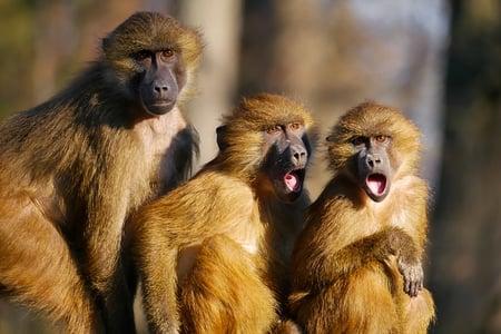 body-monkeys-shocked