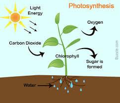 body-photosynthesis