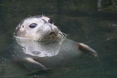 body-seal-cc0