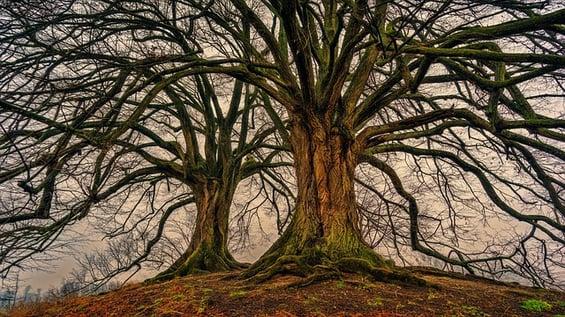 body-tree-trunks-5