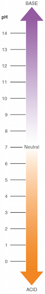 body_actsciencephscale.png