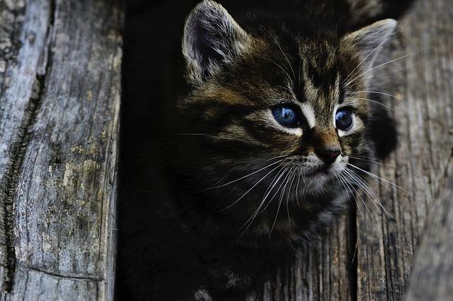body_adorable_kitten.jpg