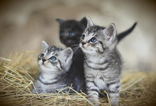body_adorable_kittens