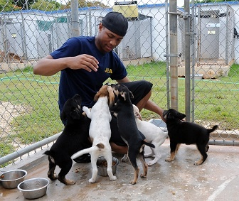 body_animalshelter