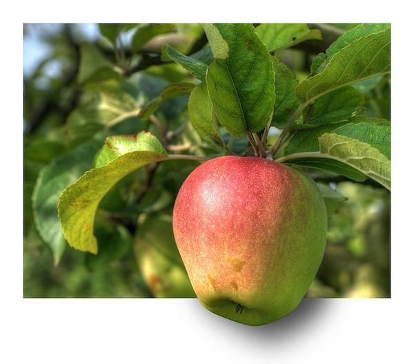body_apple-2.jpg