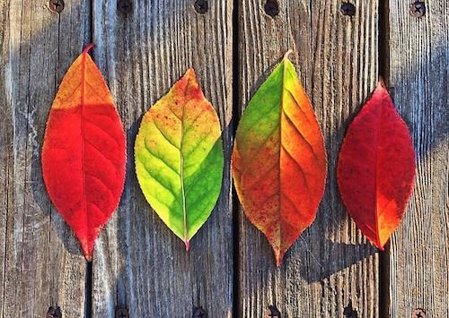 body_autumnleaves.jpg