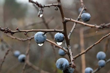 body_blueberries.jpg