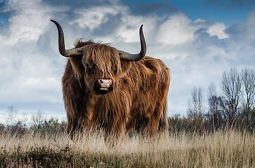 body_bull_animal_taurus