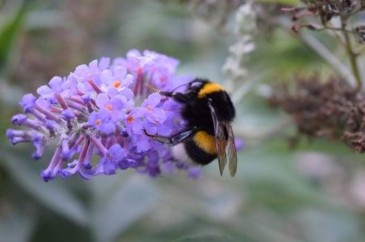 body_bumblebee