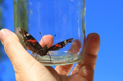 body_butterfly-1.jpg