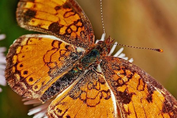 body_butterfly.jpg