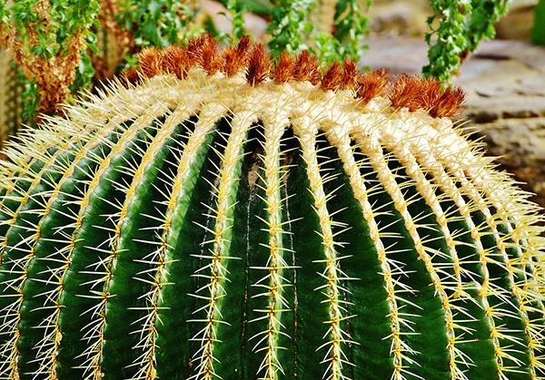 body_cactus.jpg