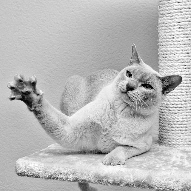 body_cat_high_five.jpg