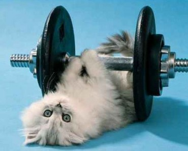 body_catworkout.jpg