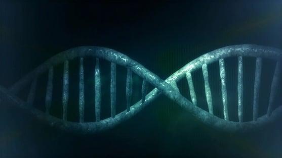body_cellDNA