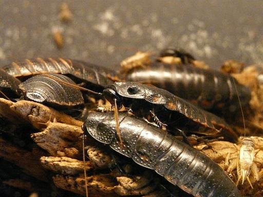 body_cockroaches.jpg