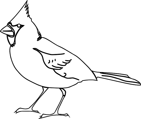 body_contourbird