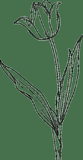 How To Draw Contour Line Art 4 Key Steps