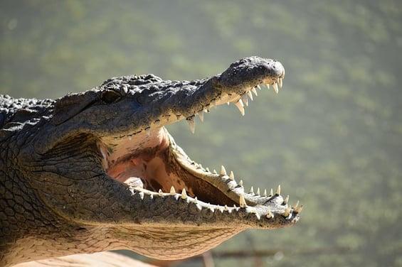 body_crocodile3