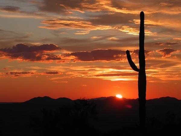 body_desertcactus.jpg