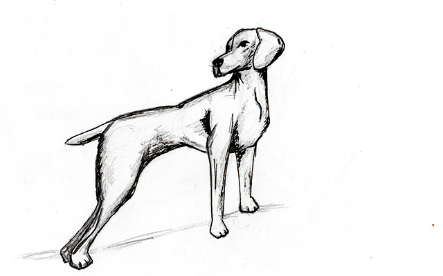 11 Easy Steps For How To Draw A Dog