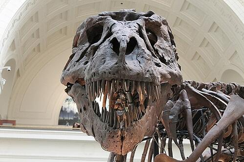 body_dinosaurbones
