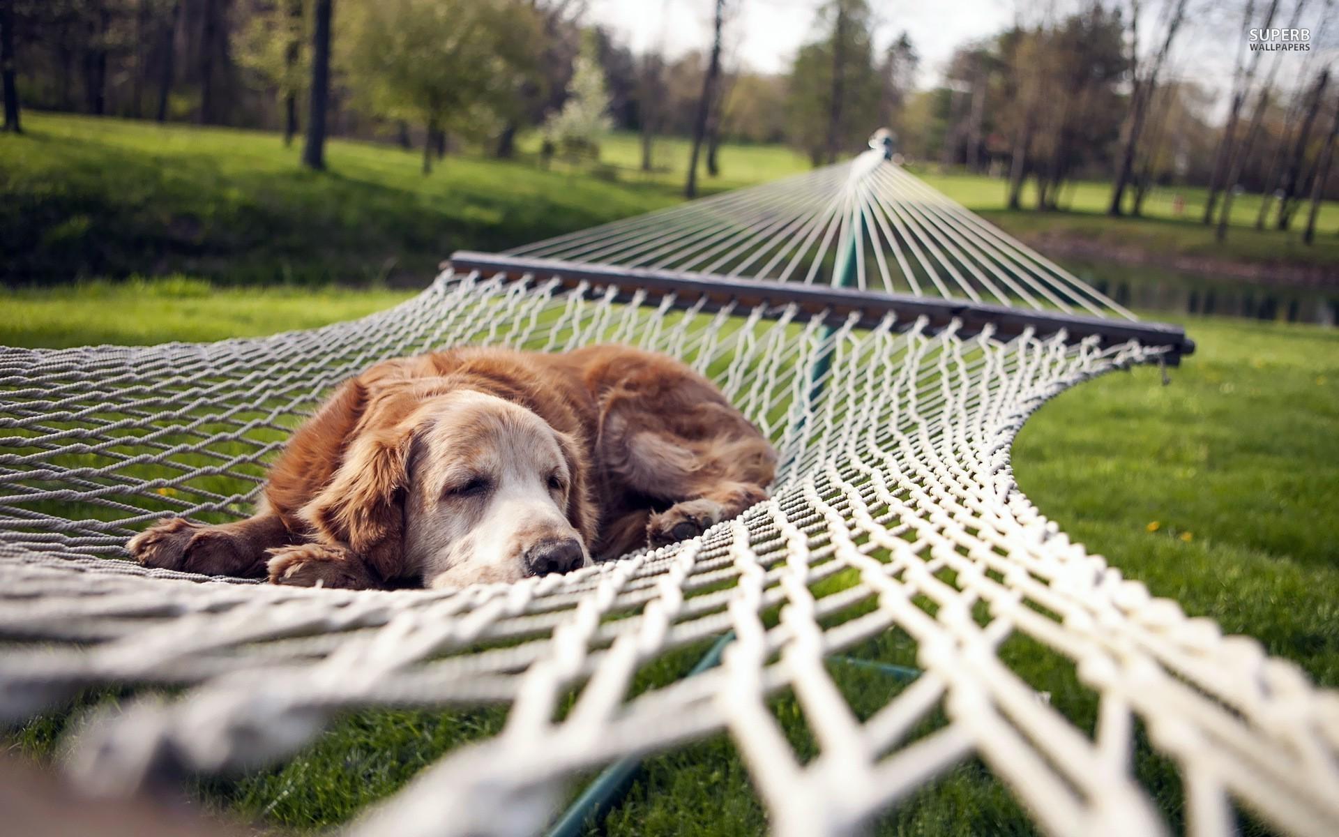 body_dog_rest.jpg