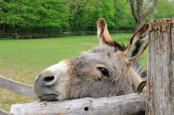 body_donkey.jpg