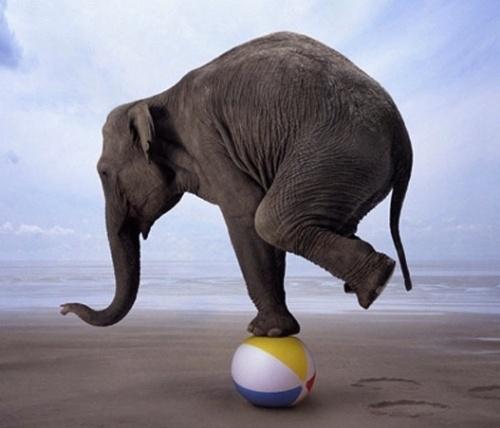 body_elephantbalance.jpg