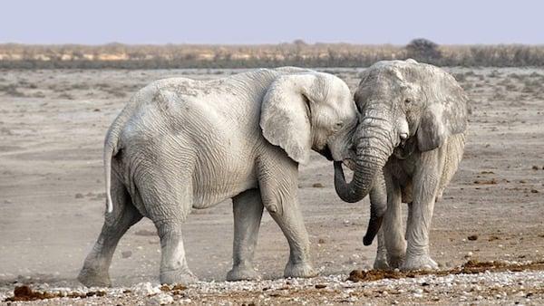 body_elephants.jpg