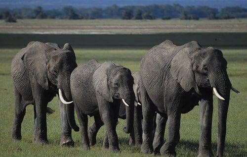 body_elephants_community
